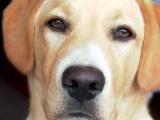 Segítő kutyák diszkriminációja